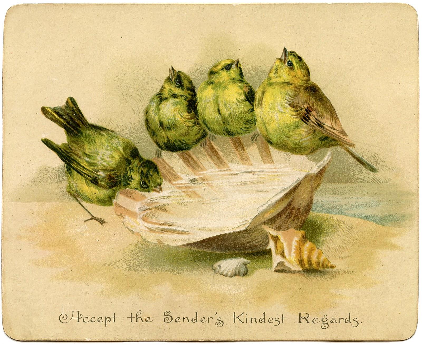 Graphic Image Birds With Seashell Birdbath The