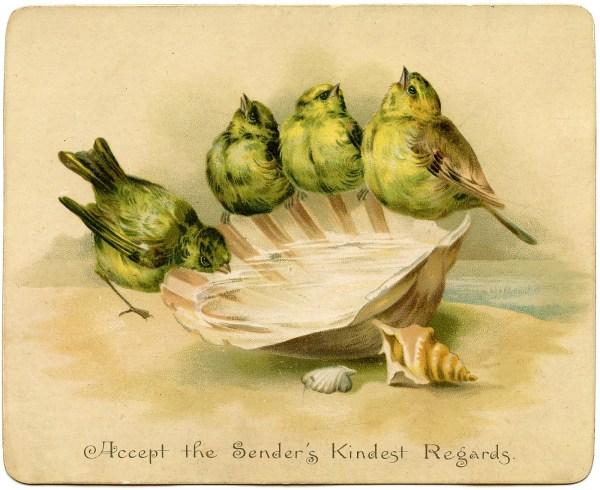 Graphic - Birds With Seashell Birdbath