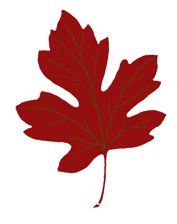 vintage fall clip art - maple leaves