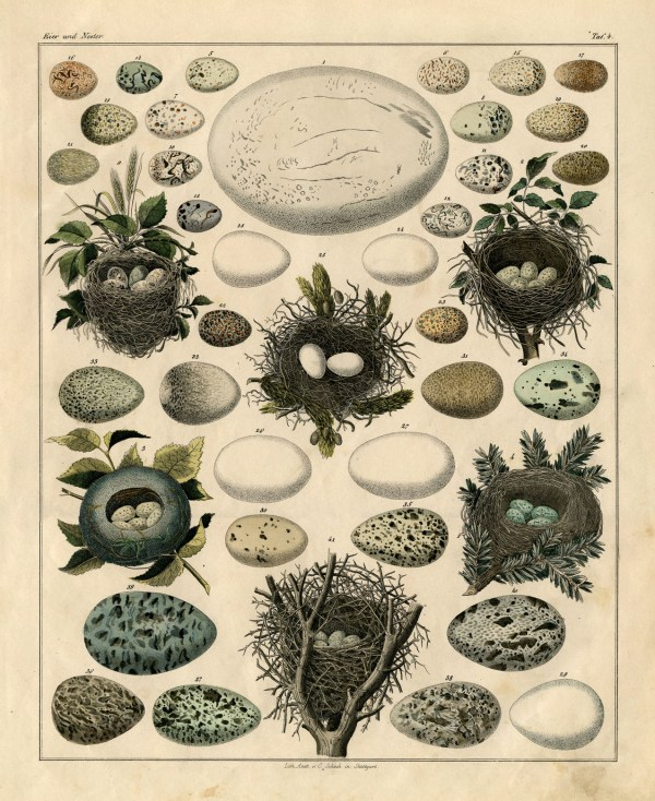 Instant Art - Nest And Egg Print Graphics