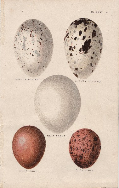 Brown  White Speckled Eggs  The Graphics Fairy