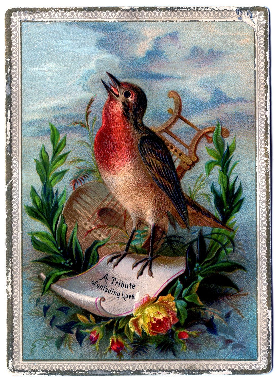 Vintage Clip Art Amazing Bird Card Robin The