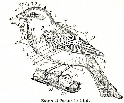 Sea Pen Diagram Pen Test Wiring Diagram ~ Odicis