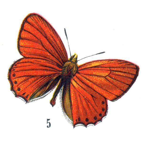 Free Vintage Clip Art - Orange Butterflies Halloween Graphics Fairy