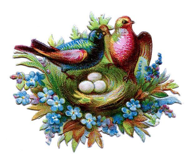 victorian clip art - scrap birds