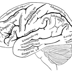 The Human Brain In Photographs And Diagrams Fisher 400cx Vintage Anatomy Images Graphics Fairy