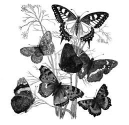 butterflies antique papillons decoupage branch butterfly clipart graphics garten dekupaj blanco negro animaux fairy kerstin transfer papel paris enlarge visitar