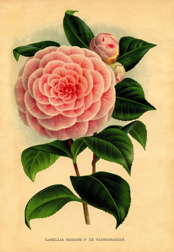 Free Printable Botanical Flowers