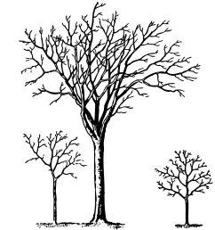 vintage halloween clip art spooky trees [ 1206 x 1303 Pixel ]