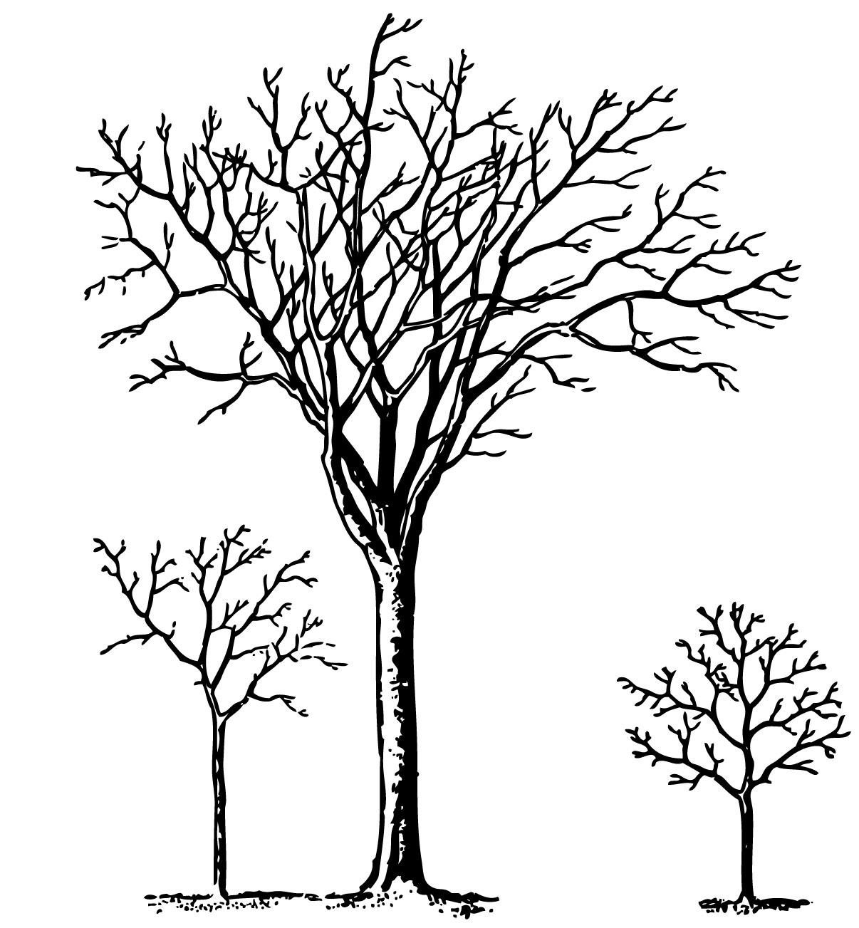 hight resolution of vintage halloween clip art spooky trees