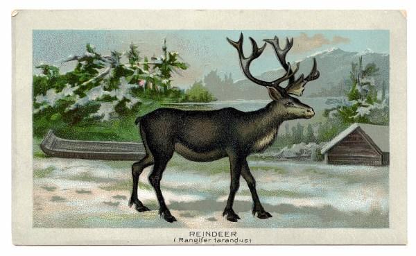 Antique Christmas Clip Art - Wonderful Reindeer Graphics Fairy