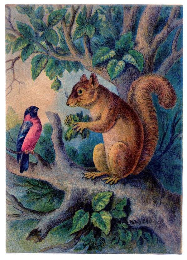 Vintage Clip Art - Sweet Squirrel With Bird