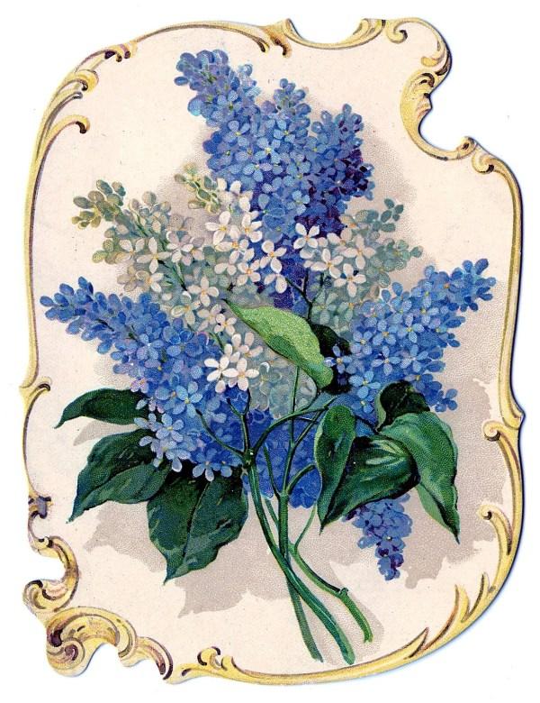 victorian clip art - stunning lilacs