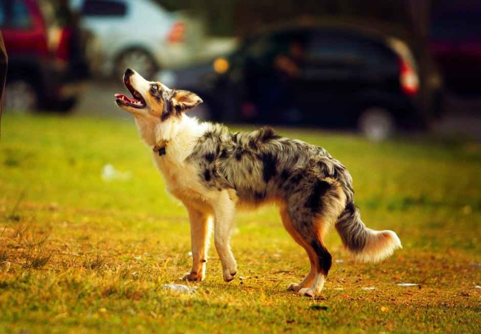 selective focus photo of a dog
