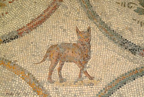 cat mosaic bardo museum, tunis, Roman cat history