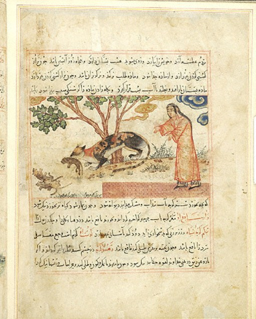 1297-1298 The Benefits of Animals Persian Female Cat Carries one Kitten to Three Dead Ones MSM.500 fol.49v Source: Morgan Library, New York, Cat in Middle Ages Manuscripts