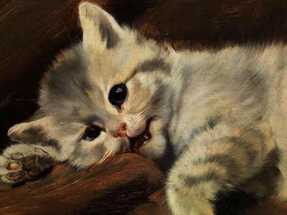 Grey Kitten (Detail) Julius Adam II Private Collection