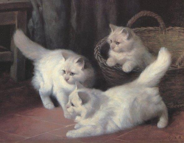 Three White Angora Kittens Private Collection