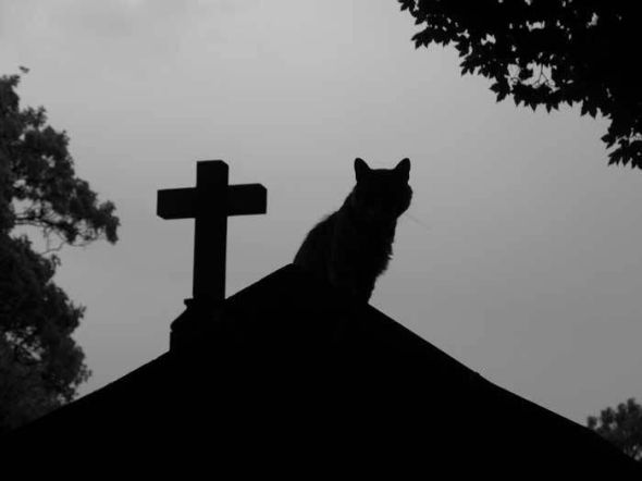 cats in superstitions, cat myths, cats and death, grave yard cat