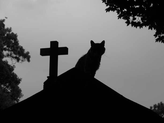 Myths and Superstitions: Cats and Death