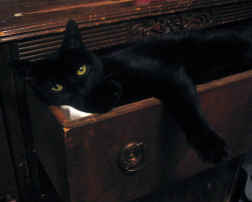 cat in drawer - cat poems