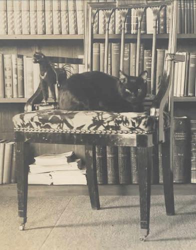 Bambino Mark Twain's cats