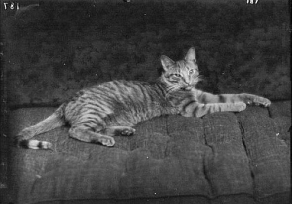 Buzzer the Cat 1912