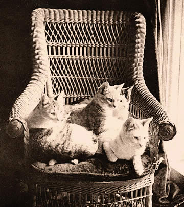Mark Twain's Cats in a Chair