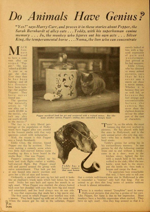 First cat in film Pepper in the news, felines in film