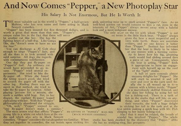 Pepper the cat in the news