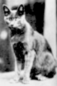 felines in film, cats in film, Pepper, felines in film