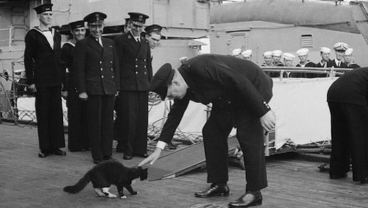 Sir Winston Churchill's cats, Blackie on HMS Prince of Wales