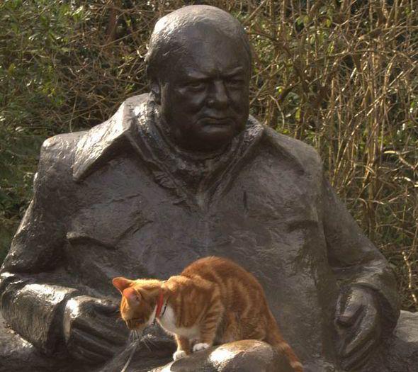 Sir Winston Churchill's cats, Jock