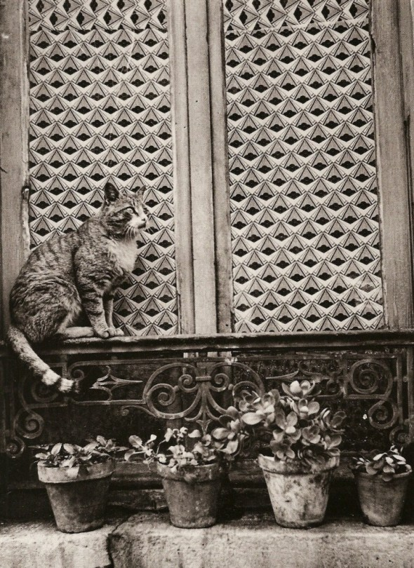 Boubat cats, Trinity 1967
