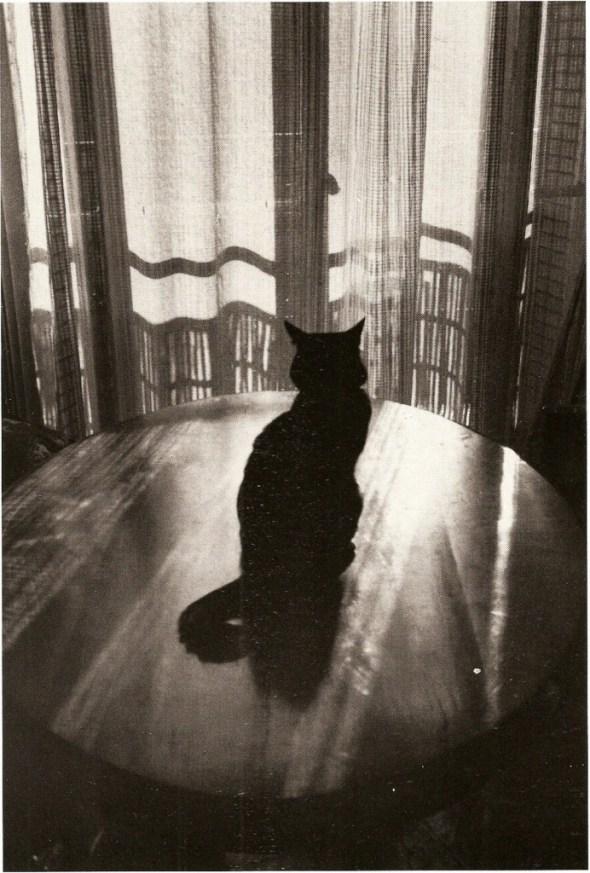 Windows and cat (By Edouard Boubat)