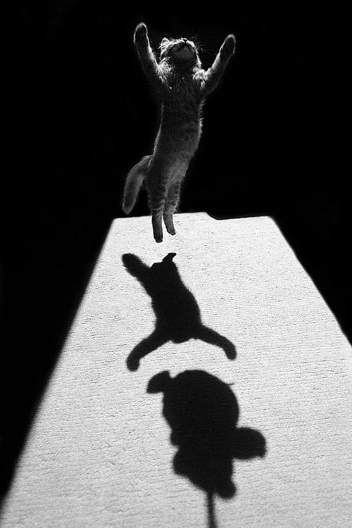 Edouard Boubat cat photos, cat leaping, cats in photographs
