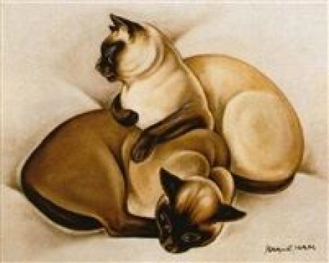 Deux chats siamois 1925-1930