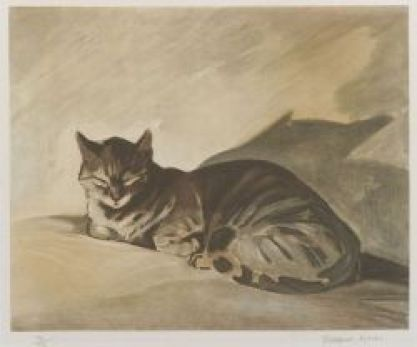 cats in illustrations, Jacques Lehmann Nam