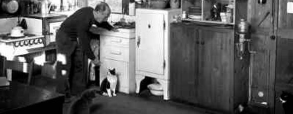 Weston with cats, cats in photos, cats in black and white
