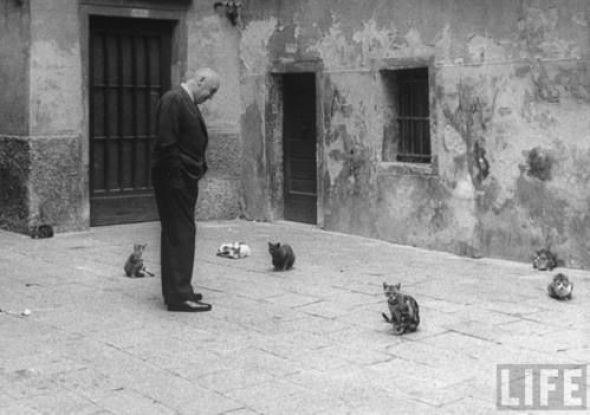 Gjon Mili, Anatomy Of A Murder, 1959. Source LIFE Photo Archive, hosted by Google. Otto Preminger looking at stray cats on Venice street, cats in photos, famous cats, cats in film, cats in cinema