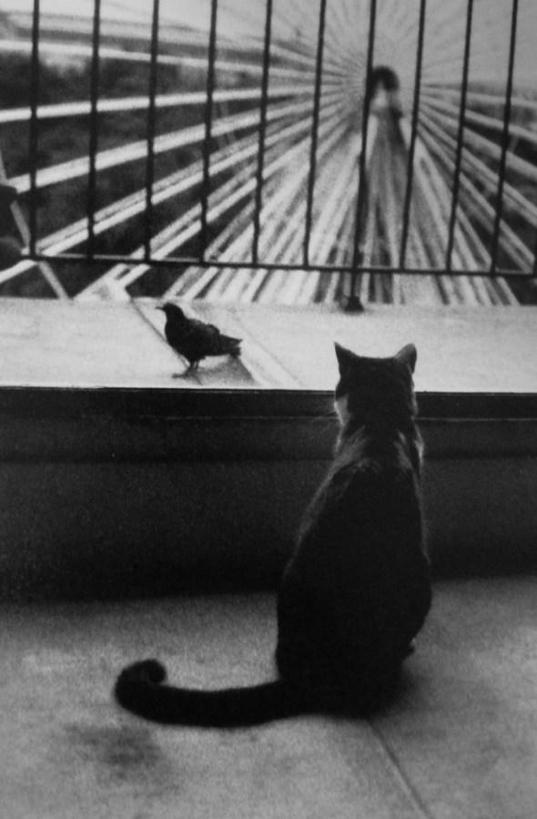 Henri Cartier-Bresson, 1953 An Attentive Cat