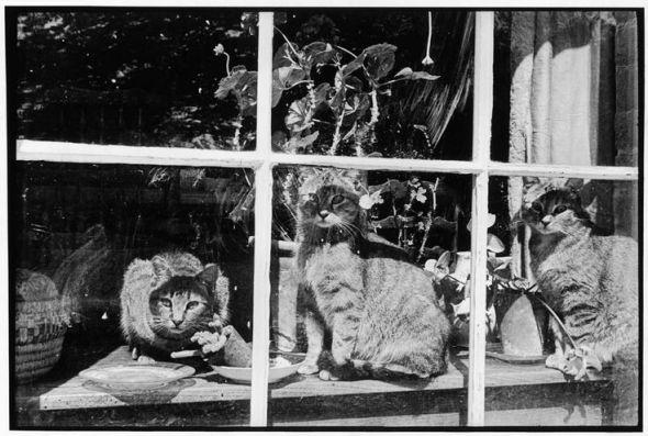Henri Cartier-Bresson 1951, cats in a window