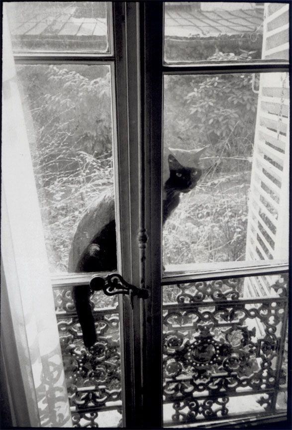 HCB The Cat without a mother,
