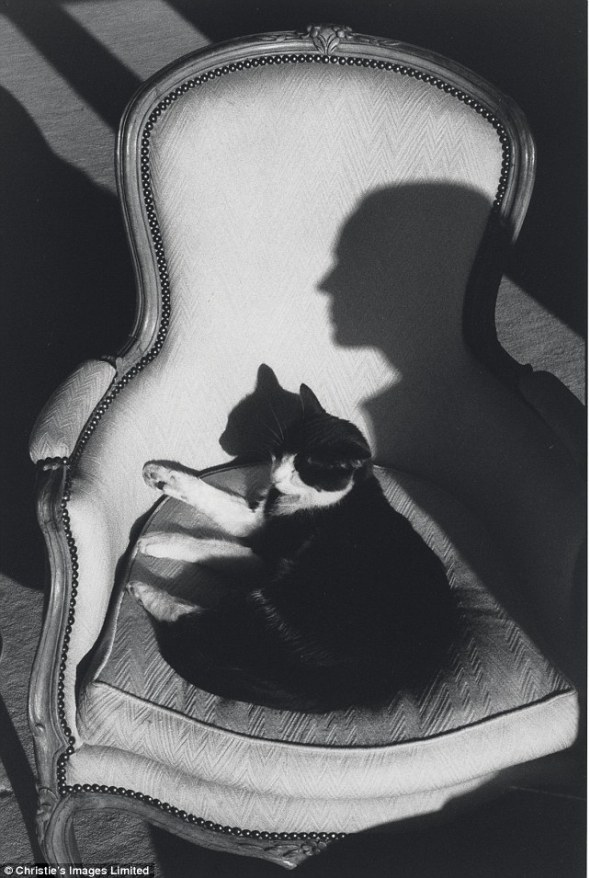 Our Cat Ulysses and wife Martine's Shadow, 1988, cats in art