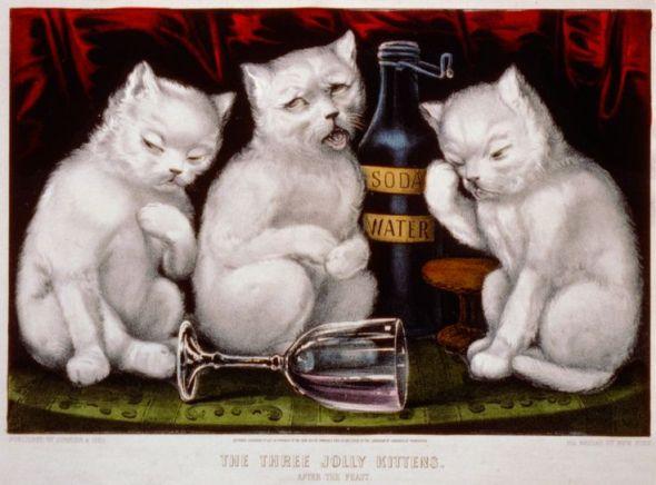 Three Jolly Kittens, white kittens