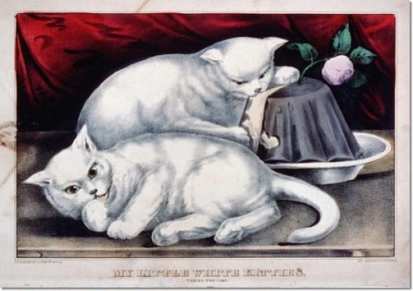 My little white kitties taking the cake