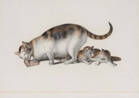 Mind Mother and kittens 9