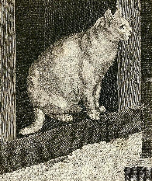 Gottfried Mind cat sketch, Raphael of Cats