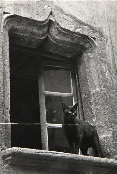 Cat on a Window Ledge 1938