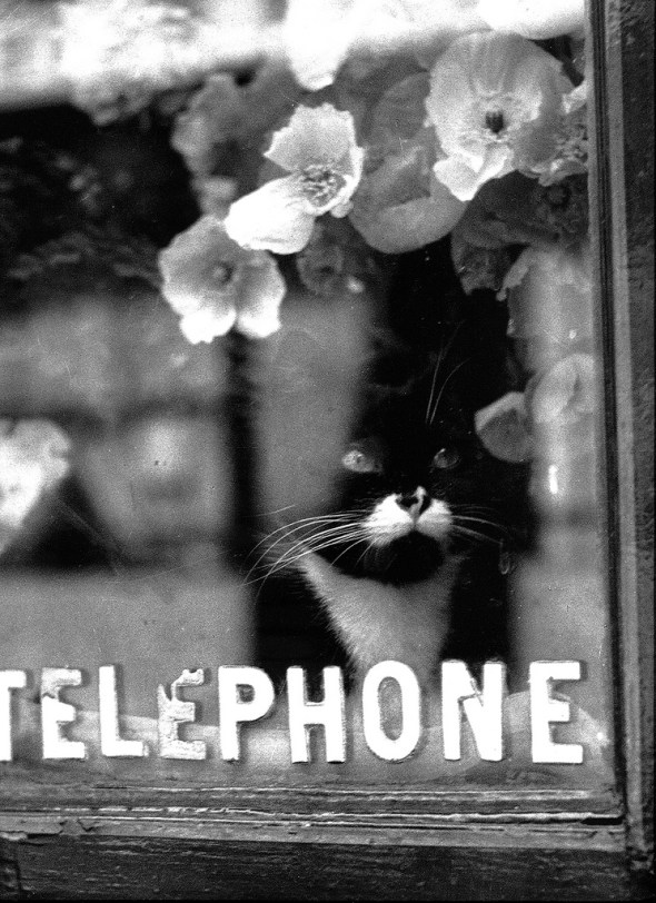 Chat Colette 1938